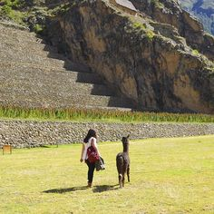 Country Specialists Ali and Kathryn recently returned from a research trip to Peru where they made friends with an alpaca in Ollantaytambo #Peru #Ollantaytambo #Alpaca #SouthAmerica #Wildlife #WildlifePhotography #Nature #NaturePhotography #TravelPhotography #TravelGram #Travel #TheAudleyWay