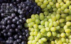 Ich bin der Weinstock, ihr seid die Reben. Wer in mir bleibt und ich in ihm, der bringt viel Frucht. Joh 15,5