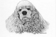 Cocker Spaniel Dog Bill Harrah Matted Card Canine Art
