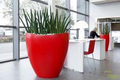 Interieurbeplanting | Kantoorplanten | Planten | Kantoor | Hydrocultuur | Luxe | Onderhoud | Kunstplanten | Potten | Binnenhuisarchitectuur | Inrichting | Bedrijven | Groen |