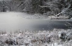 Kruunuvuorenlampi - kruunuvuorenlampi kaitalampi lampi metsälampi luonnontilainen jäätynyt jäässä jäinen jää lumi luminen metsämaisema kruunuvuori