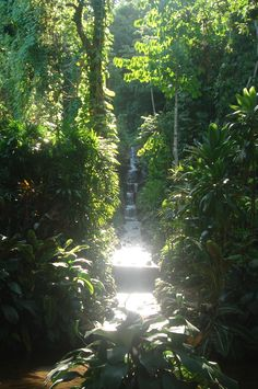 Jardim Botanico -RIO