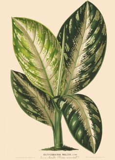 - L& horticole : - Biodiversity Heritage Library Botanical Drawings, Botanical Prints, Illustration Botanique Vintage, Illustration Française, Impressions Botaniques, Leaf Drawing, Plant Painting, Fauna, Tropical Leaves