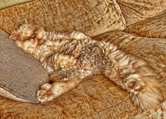 15 Incredible Pictures of Purrfectly Camouflaged Catsfrom welovecatsandkittens.com