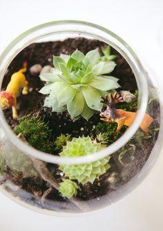 decoracao-como-fazer-terrario-cactos-suculentas-studio-lab-decor (5)