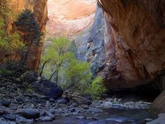 I would dearly love to go hiking through The Narrows in Zion National Park, near Springdale in Utah. #zion #utah #usa