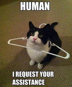 Help human!