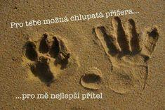 Pet parasite cleanse for dogs and cats True Friends, Best Friends, Pet Sitter, Springer Spaniel, Pet Loss, Rainbow Bridge, Pet Names, Animal Rights, Custom Posters