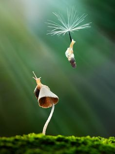 way scientists Flying Without Wings goodbye my friend by nordin seruyan Animals And Pets, Funny Animals, Cute Animals, Beautiful Creatures, Animals Beautiful, Goodbye My Friend, Flying Without Wings, Cool Pictures, Cool Photos