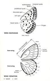 wings diagram - Google Search