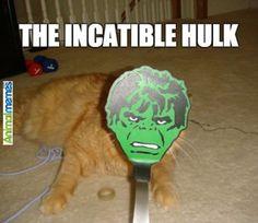 Cat memes The incatible hulk...
