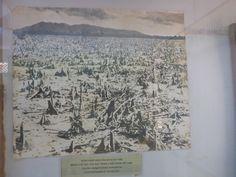 Het door Agent Orange verwoeste mangrovebos
