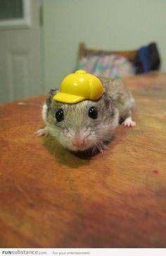 Cute hamster in a hard hat