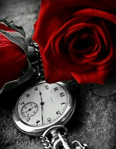 A rosa encanta!!!