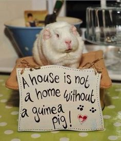 Every home needs at least one piggy, and I need this sign! Love it.