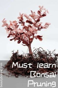 Undoubtedly the most crucial means to educate a Bonsai is to trim it often.