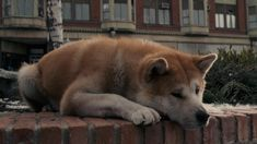 Hachiko.....i cried so much for this movie.