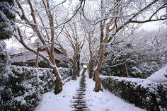 大原寂光院の雪の長い石段と雪の花