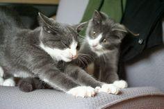 Samen-sporten-katten-3253.jpg