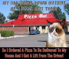 Grumpy Cat Quotes, Funny Grumpy Cat Memes, Cat Jokes, Funny Cats, Funny Animals, Funny Vid, Haha Funny, Hilarious, Pretty Cats
