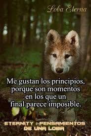 Resultado De Imagen Para Loba Luna Frases De Lobos Lobos