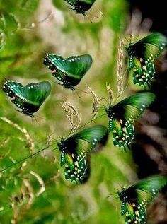 Pretty green flock of butterflies