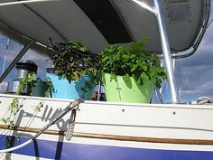 LIVING ABOARD ~ Gardening on a Sailboat