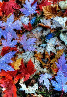 """Buggy Bee's Theme Thursday""""Autumn"""""""
