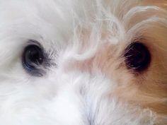 Existe la comunicación telepática con nuestros perros