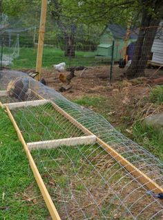 Quer criar uma galinheiro bonito e funcional para as suas galinhas? Descubra aqui uma ideia muito interessante para o seu quintal. Um galinheiro com túneis dispersos pelo quintal, é uma ideia muito útil pois as suas galinhas vão poder passear e ao mesmo tempo vão comendo ervas daninhas e insectos.