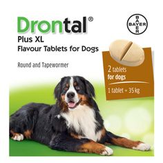 Drontal Plus Xl Wormer For Dogs 35kg 77lbs 2 Tablets Bayer Made In Germany 4007221043768 Ebay Ad Gt Kg Dogs Worms In Dogs Dogs Wormer