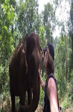 The Mondulkiri Project is located east of Phnom Penh. The Mondulkiri Project rescue overworked elephants so that they can retire away from elephant rides Cambodia, Elephant, Projects, Animals, Log Projects, Animais, Animales, Animaux, Animal