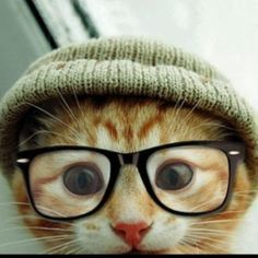 hipster dogs cats in glasses illustration - Google Search