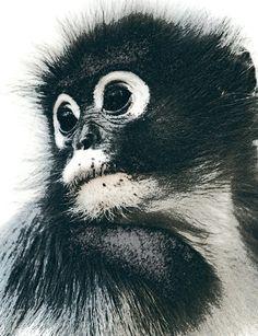 Nieuw in mijn Werk aan de Muur shop: Portret van een lief aapje