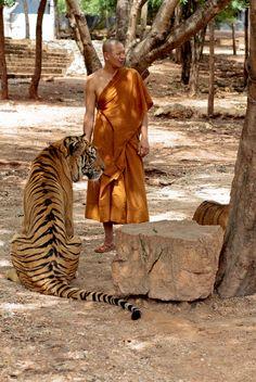 Monk with Tiger by Russell Swindlehurst on 500px | Wat Pha Luang Ta Bua, Kanchanaburi province, Thailand #tigertemple √