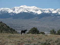 Reno, Nevada. Spent a summer here when I was 12 -- we went on long trail rides, sometimes by moonlight.