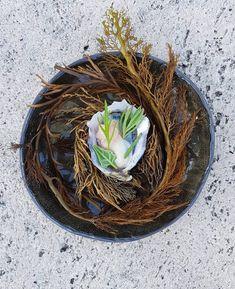 Wolfgat Restaurant - Paternoster - one of the Top 1000 restaurants in the world. Sauvignon Blanc, Oysters, Restaurants, Herbs, Lifestyle, Top, Instagram, Restaurant, Herb