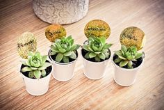 Suculentas na decoração do casamento | Lembrancinhas Succulent Wedding Favors, Wedding Favours, Wedding Gifts, Wedding Invitations, Wedding Day, Anniversary Parties, Table Plans, Communion, Wedding Planning