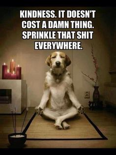 I am no stranger to meditation. The very first yoga class I ever took, over 18 years ago, happened to be a free meditation class on January I… Yoga Humor, Gym Humor, I Love Dogs, Puppy Love, Cute Dogs, Funny Dogs, Funny Animals, Cute Animals, Fu Dog