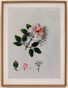 herbario contemporary art - Pesquisa do Google