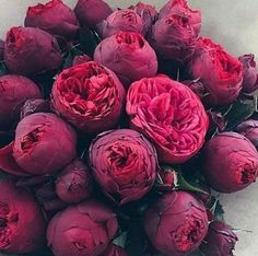 dark burgundy peonies