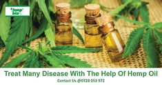 Hemp oil is obtained from seeds of the Cannabis plant. Extracted solely from the seeds, it is also known as hemp seed oil. People often confuse hemp extracts in Cannabis Plant, Cannabis Oil, Cannabis Edibles, Red Palm Oil, Citrus Essential Oil, Medical Cannabis, Vape Juice, Hemp Seeds, Hemp Oil