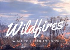 Colorado Wildfires need to know - Wild fire series - wildfires are a part of Colorado Life and it's good to know as much as you can about them.
