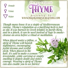 This herb has been used for healing - both physical & metaphysical - throughout the ages. Before antibiotics, thyme oil was applied to bandages as an antiseptic. Its active ingredient, Thymol, is still used in mouthwashes. // #kitchenwitch #thyme #herbalmagick #greenwitch #hedgewitch #magick #healing #purification #sleep #courage Magic Herbs, Herbal Magic, Thyme Uses, Thyme Herb, Grimoire Book, Witch Herbs, Healing Spells, Sleep Dream, I Believe In Love