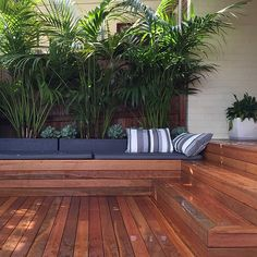 Howea Forsteriana in planters to keep them small