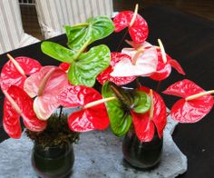 Nothing says Valentine's Day like heart-shaped Hawaiian anthuriums!
