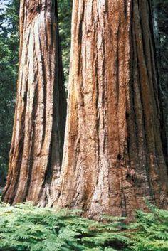 Lugares que debes conocer en el bosque Redwood