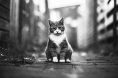 Why So Sad? - That poor kitty cat :( I have also upload this one in color before, but I also love the mono version :D