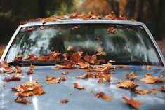 get ready for pumpkin spice & raking leaves. . .