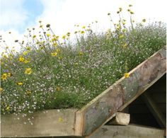 Wildflower and Sedum green roof mats